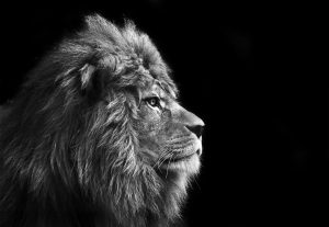 Marriage Coaching: Marriage Unchained for husbands facebook group (white lion profile)