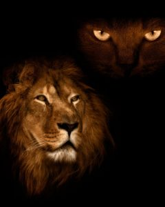 marriage advice for men the benefits to your marriage; priceless (lion with cat eyes above)